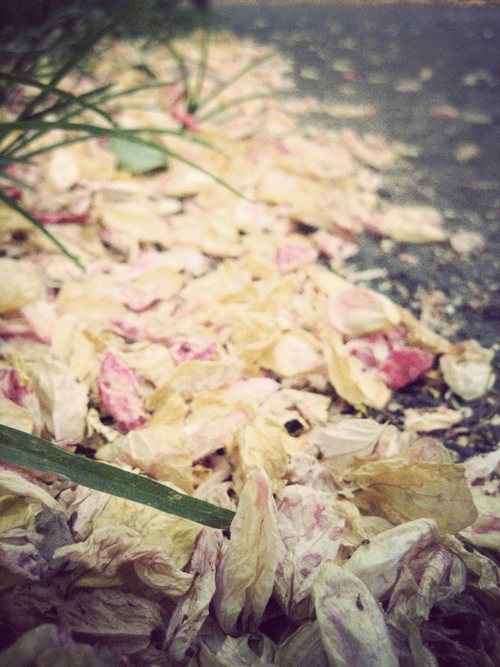 Petals_0395