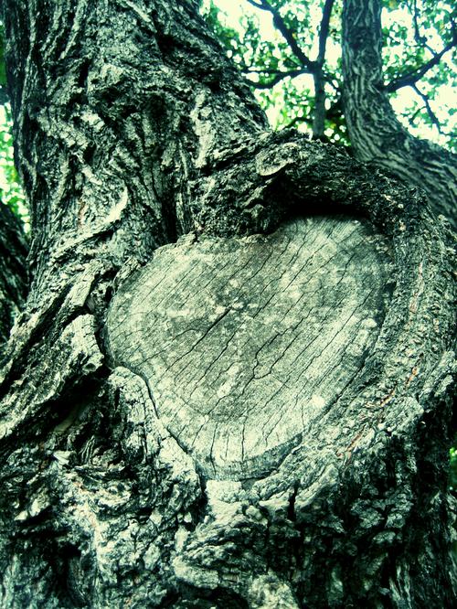 HearttreeIMG_0346